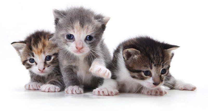 Co wpływa na rozwój kota?