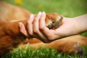 Pierwsza pomoc u psa: co zrobić krok po kroku [przykłady] [infografika]
