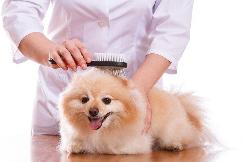 Suplementy na sierść dla psa