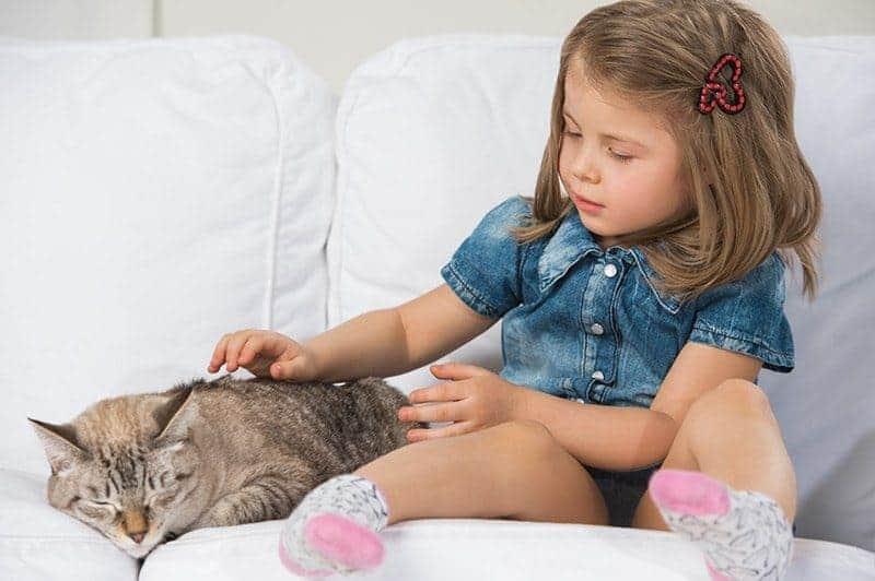 Czy kot powinien wychodzić z domu?