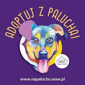 Schronisko dla zwierząt Warszawa Na Paluchu