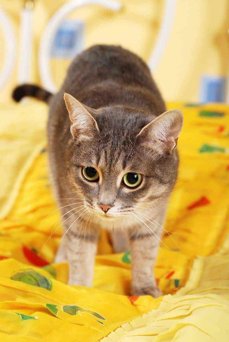 Co zrobić kiedy kot sika na łóżko?