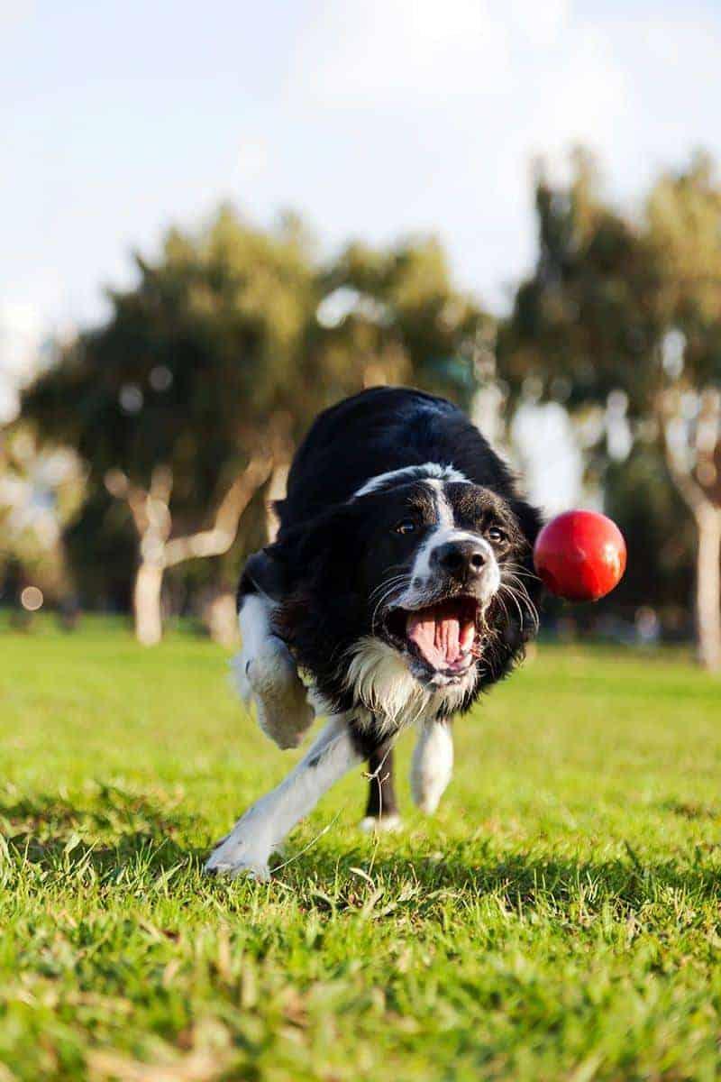 Jak zapobiegać wzdęciom u psa?
