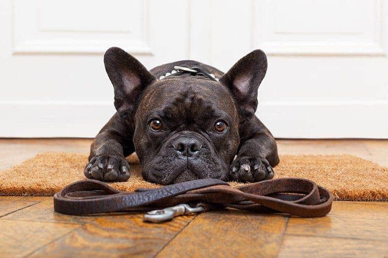 Strata jako sposób na ukaranie psa