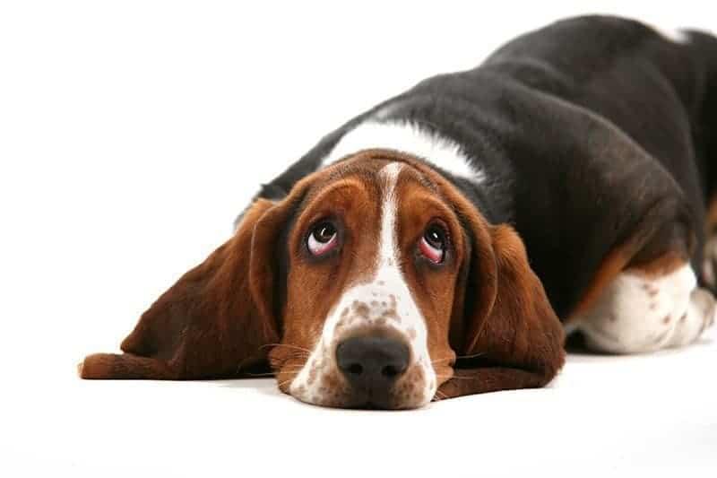 Kiedy karać psa?
