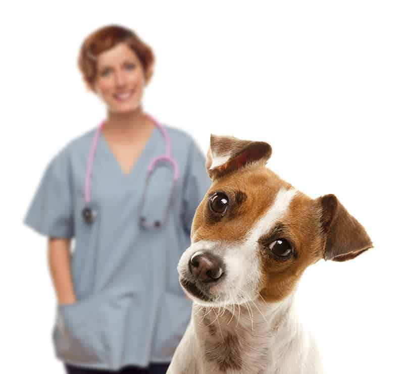 Znaczenie rutynowych badań kontrolnych kału u zwierząt