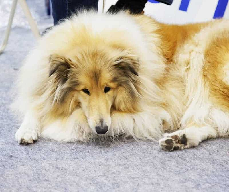 Niewydolność trzustki psa u rokowanie