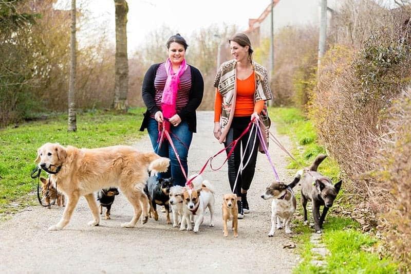 Jak wybrać dobry hotel dla psów