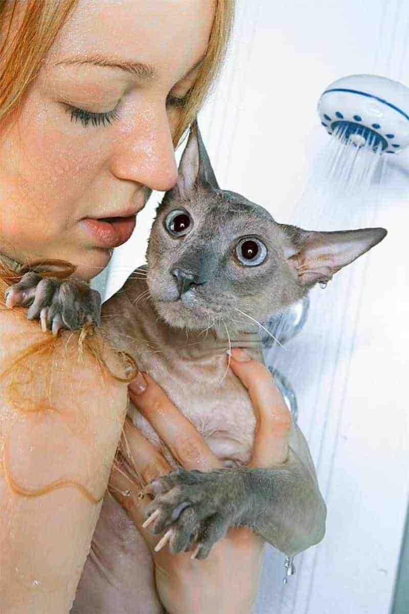 Nie bierz prysznica razem z kotem