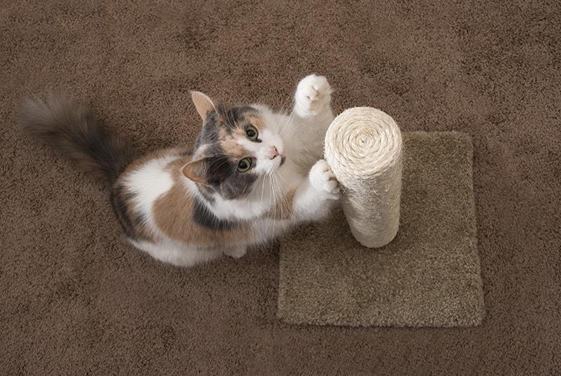Co zrobić, żeby kot nie drapał mebli?