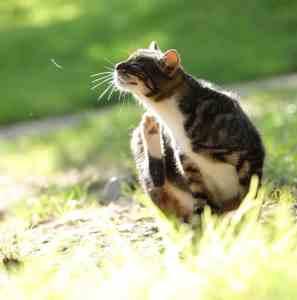 Alergia u kota