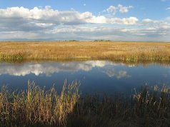 Closer to home and to my heart -- Alamosa National Wildlife Refuge.