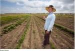 Arkansas Valley organic farmer Dan Hobbs photo via the Pueblo Chieftain
