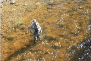 An angler in the Roaring Fork River in Aspen in June 2014. Photo/Allen Best
