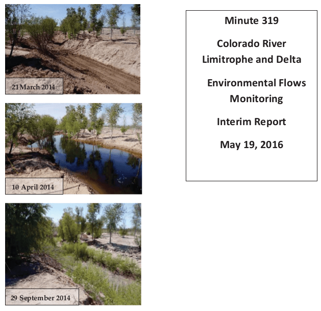 """The """"Minute 319 Colorado River Limitrophe and Delta Environmental Flows Monitoring Interim Report,"""" released by the International Boundary and Water Commission, documents the effects of the environmental flows in the delta from the initial release of a pulse of water from March 23 through May 18, 2014, plus subsequent supplemental deliveries of water through December 2015."""
