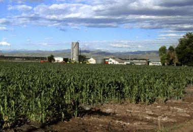 Corn field in Colorado. Photo credit Wikimedia.