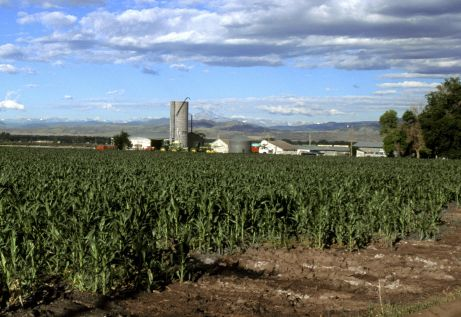 Corn field in Colorado. Photo credit Wikimedia.