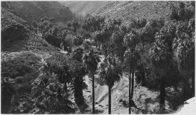 Agua Caliente Reservation in 1928. Photo credit Wikipedia.