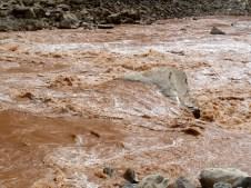 Big Drop 2, on the Colorado River. Photo: Brent Gardner-Smith/Aspen Journalism