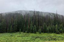 A high-elevation spruce beetle-affected forest. Photo credit: Seth Davis via Colorado State University