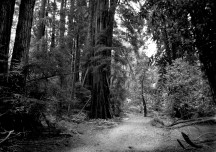 The Trail at Muir Woods National Monument