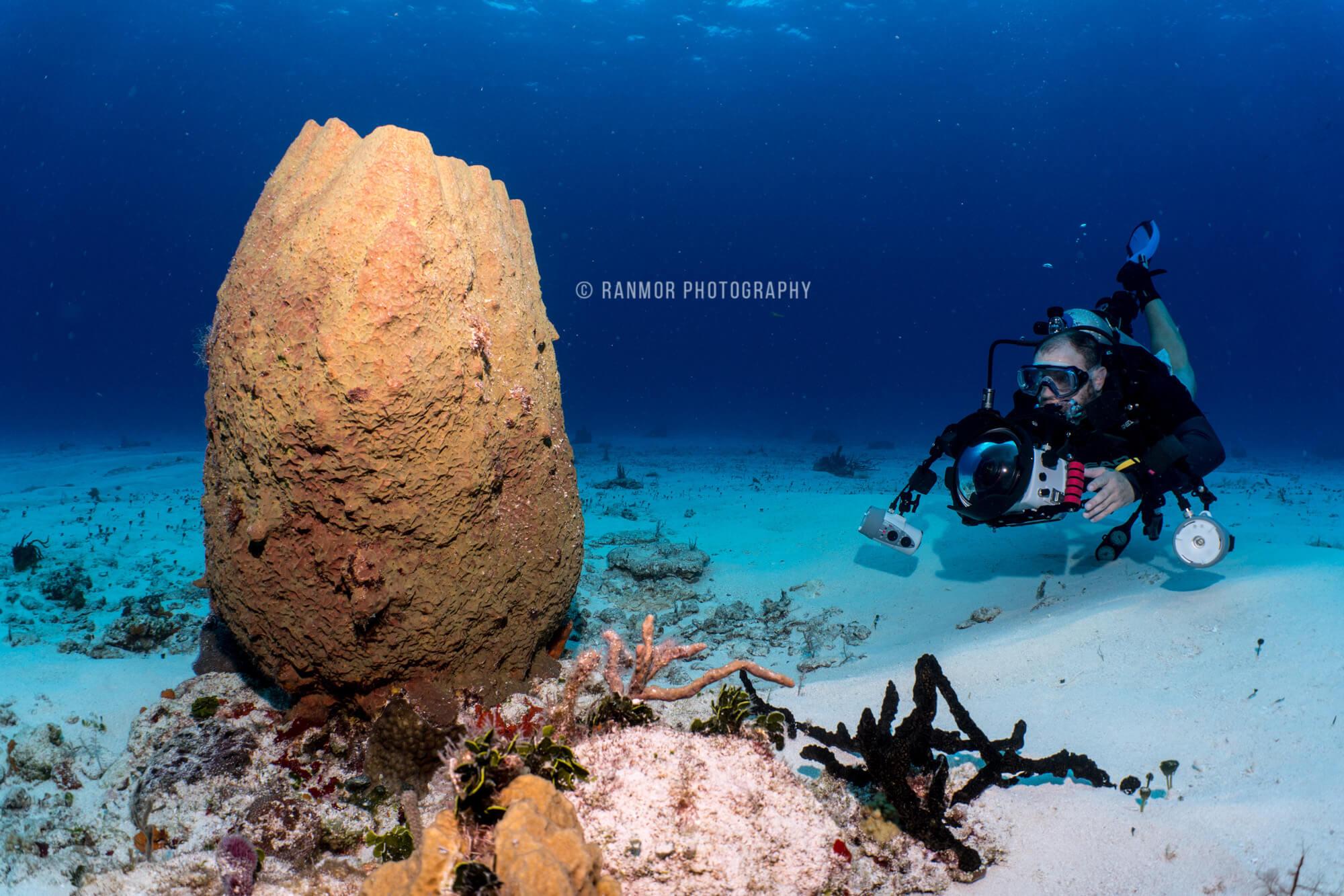 Cozumel My Cozumel Cozumel Underwater Photography School Discount