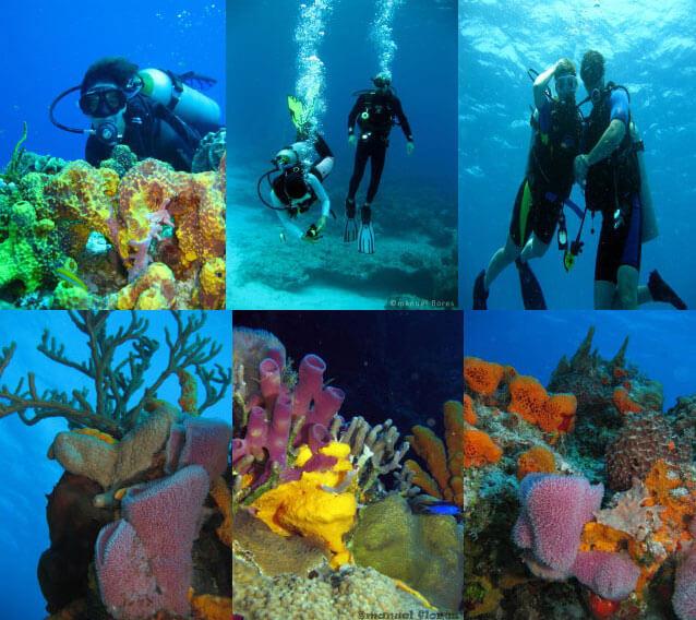 Cozumel My Cozumel Go Tour Dive Cozumel Reefs