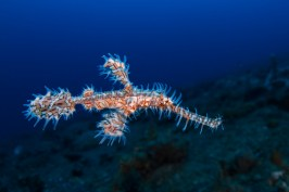 Lembeh Close Focus Wide Angle1