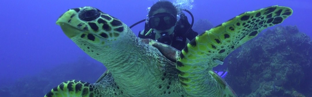 Cozumel scua diving with Hawksbill Turtle