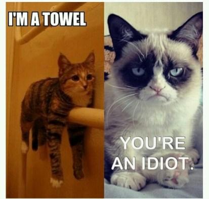cat towel meme; things that make me laugh