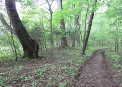Cozy Hideaway Walking Trail