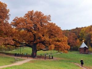 дерево года