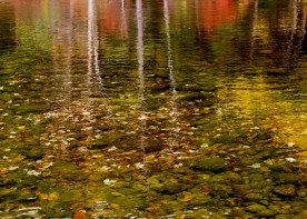 Autumn foliage reflected in Androscoggin River, Gorham, NH