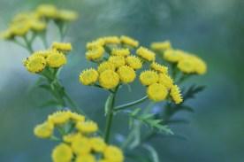 Flowers, Gorham, NH
