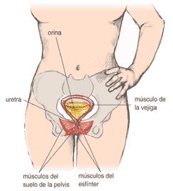 partes infección de orina