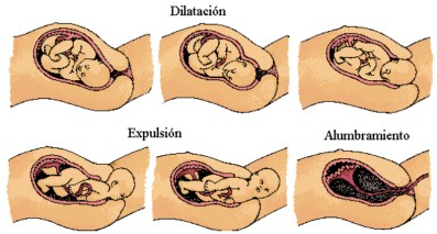 proceso en el parto
