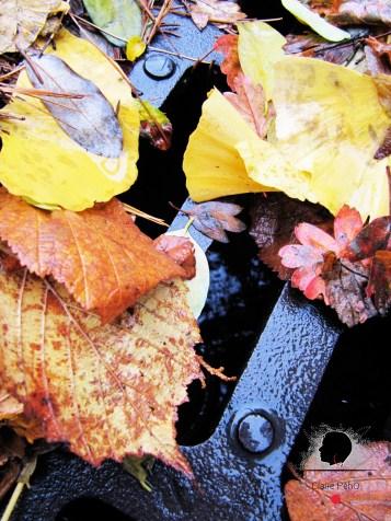 Feuilles d'automne, par Claire PéhO
