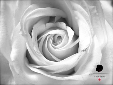 Rose, par Claire PéhO