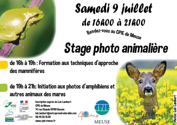 Stage photo animaliere