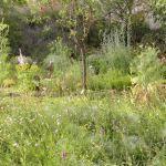 INGRID VANHALEEN-biodiversité