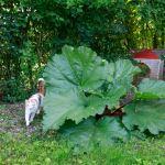 cache cache rhubarbe