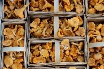 mushrooms-1623893_1280