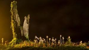 20201007 - A la découverte du monde des champignons @ Les Thermes - Evaux les Bains   Évaux-les-Bains   Nouvelle-Aquitaine   France