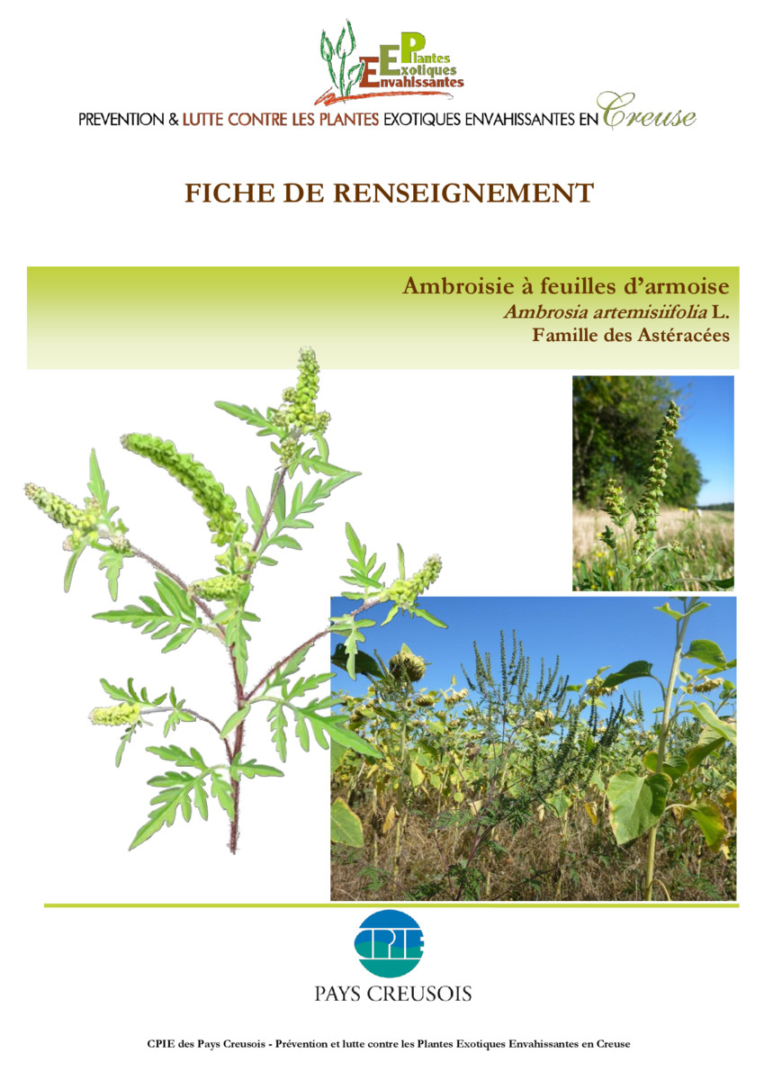 thumbnail of CR_Fiche_conseil_Ambroisie