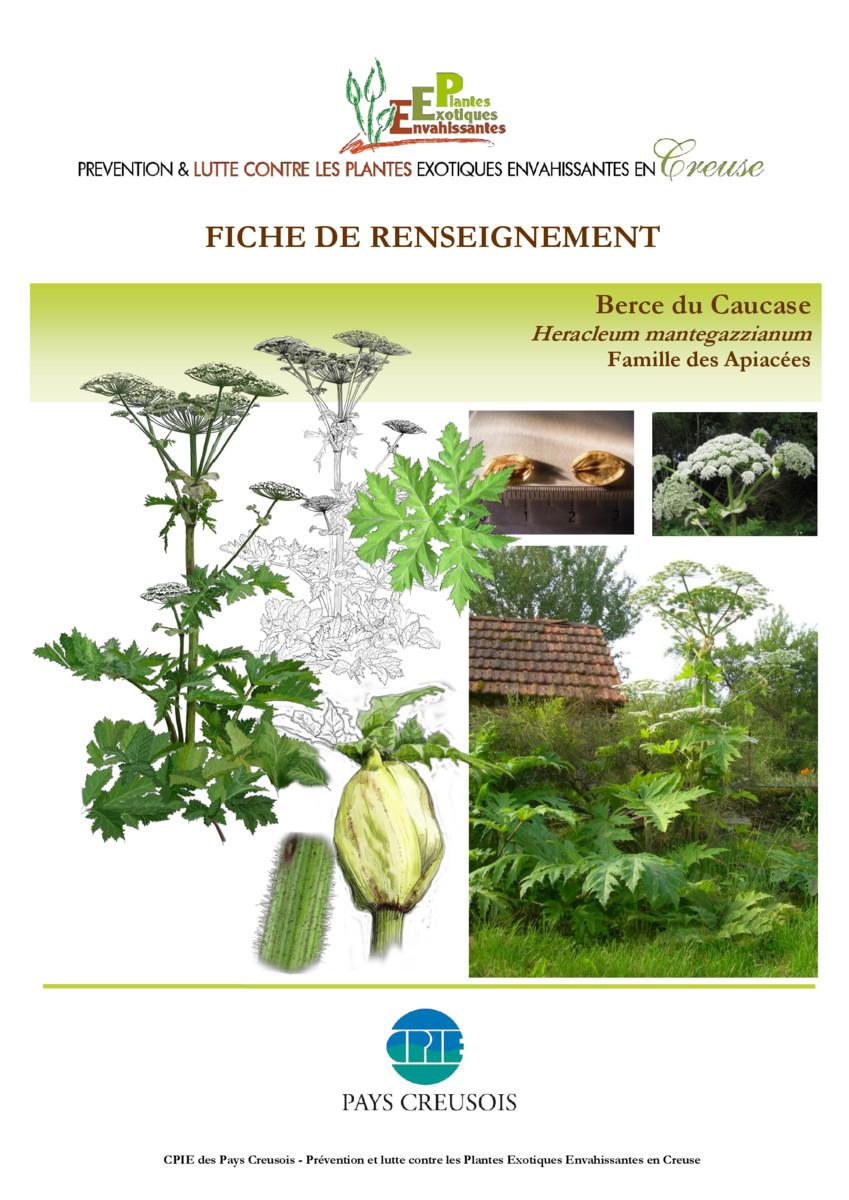 thumbnail of CR_Fiche_conseil_BERCE_du_Caucase