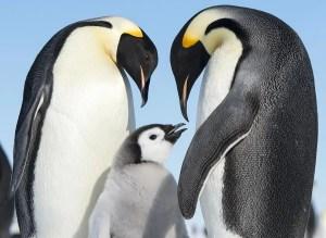 2014: l'anno europeo del pinguino