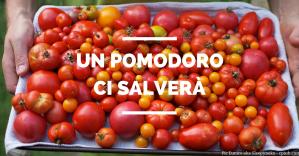 Di pomodori, produttività e creatività