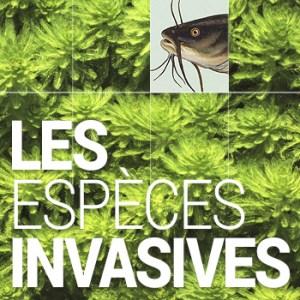 vignette-especes_invasives