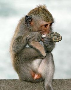 Много интересных сюрпризов ожидает приматов в процессе изучения программирования