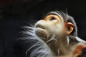 Хорошая задача принесет примату тем больше пользы, чем больше он над ней будет думать.